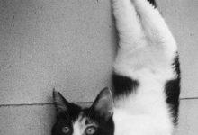Kitten Bilder Bilder Kostenlos 220x150 - Kitten Bilder Bilder Kostenlos