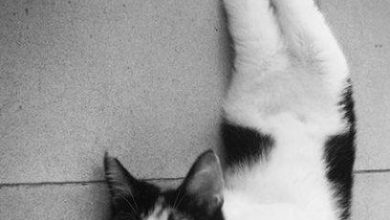 Kitten Bilder Bilder Kostenlos 390x220 - Kitten Bilder Bilder Kostenlos