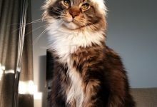 Kitten Images Bilder 220x150 - Kitten Images Bilder