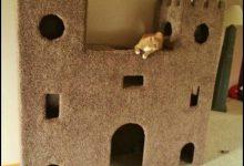 Kitten Pics Bilder 220x150 - Kitten Pics Bilder