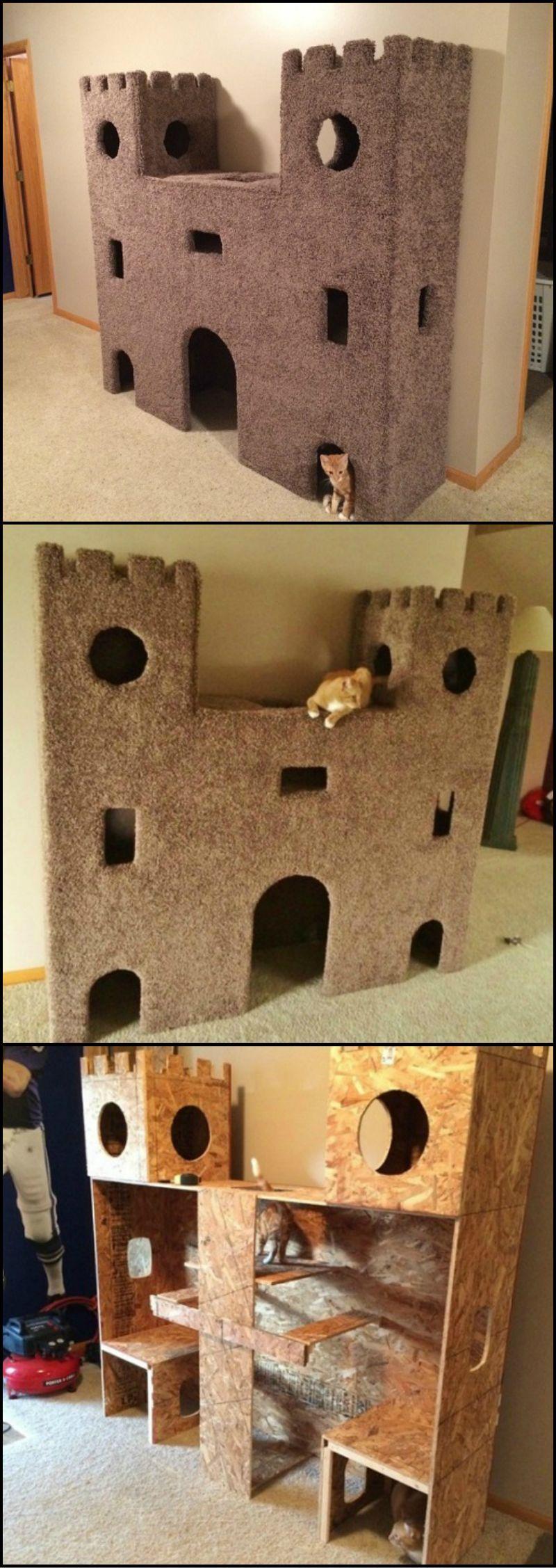 Kitten Pics Bilder - Kitten Pics Bilder