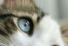 Kitten Pictures Bilder 220x150 - Kitten Pictures Bilder