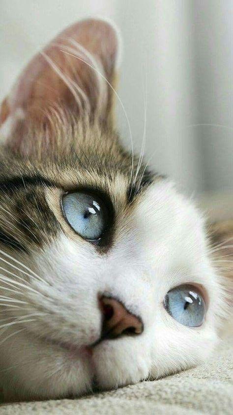 Kitten Pictures Bilder - Kitten Pictures Bilder