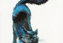 Kitty Cat Photos Bilder 220x150 - Kitty Cat Photos Bilder