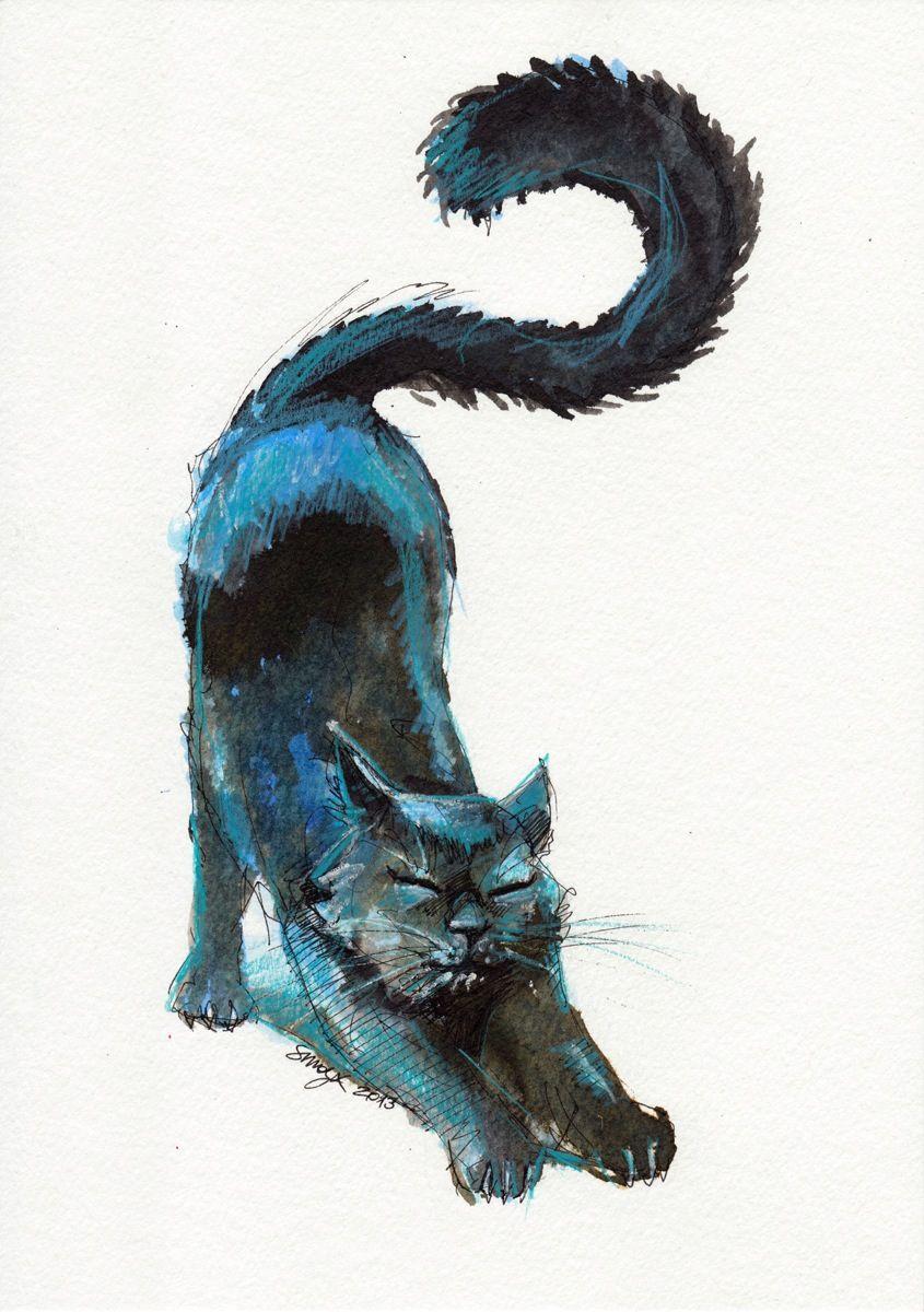 Kitty Cat Photos Bilder - Kitty Cat Photos Bilder