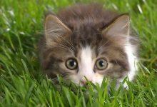 Kitty Pics Bilder 220x150 - Kitty Pics Bilder