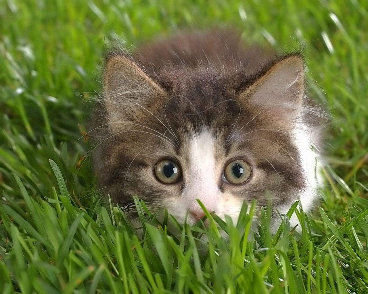 Kitty Pics Bilder - Kitty Pics Bilder