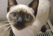 Kleinanzeigen Katzen Kaufen 220x150 - Kleinanzeigen Katzen Kaufen