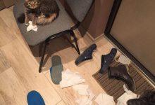 Kleine Baby Katzen Bilder 220x150 - Kleine Baby Katzen Bilder