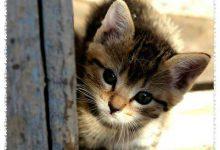 Kleine Katzen Bilder 220x150 - Kleine Katzen Bilder