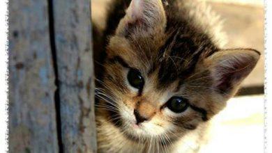 Kleine Katzen Bilder 390x220 - Kleine Katzen Bilder