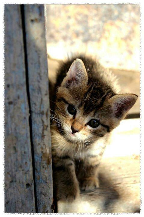 Kleine Katzen Bilder - Bilder und Sprüche für Whatsapp und ...