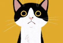 Kleine Katzen Gratis Bilder Kostenlos 220x150 - Kleine Katzen Gratis Bilder Kostenlos