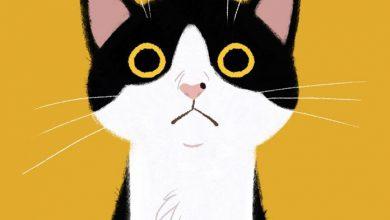 Kleine Katzen Gratis Bilder Kostenlos 390x220 - Kleine Katzen Gratis Bilder Kostenlos