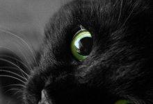 Komische Katzen 220x150 - Komische Katzen