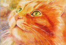Komische Katzenbilder Bilder Kostenlos 220x150 - Komische Katzenbilder Bilder Kostenlos