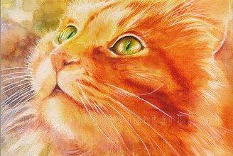 Komische Katzenbilder Bilder Kostenlos 328x220 - Komische Katzenbilder Bilder Kostenlos