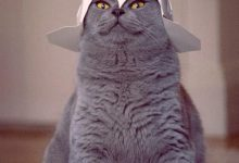 Kostenlos Katzen Bilder Herunterladen Bilder Kostenlos 220x150 - Kostenlos Katzen Bilder Herunterladen Bilder Kostenlos