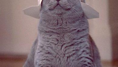 Kostenlos Katzen Bilder Herunterladen Bilder Kostenlos 390x220 - Kostenlos Katzen Bilder Herunterladen Bilder Kostenlos