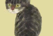 Kostenlose Baby Katzen 220x150 - Kostenlose Baby Katzen