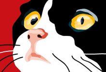 Kostenlose Katzen Spiele 220x150 - Kostenlose Katzen Spiele