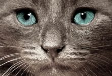 Kostenlose Katzenbabys 220x150 - Kostenlose Katzenbabys