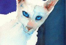 Kostenlose Katzenbilder 220x150 - Kostenlose Katzenbilder
