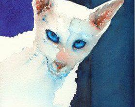 Kostenlose Katzenbilder 278x220 - Kostenlose Katzenbilder