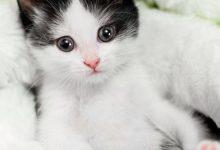 Kunst Katzenbilder 220x150 - Kunst Katzenbilder