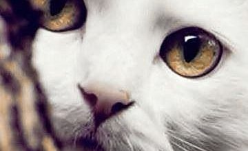 Lachende Katze Bilder 360x220 - Lachende Katze Bilder