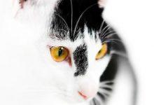 Lachende Katzen Bilder 220x150 - Lachende Katzen Bilder