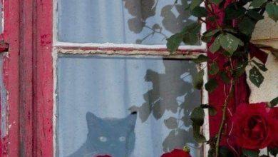 Latest Cat Images Bilder 390x220 - Latest Cat Images Bilder