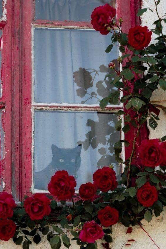 Latest Cat Images Bilder - Latest Cat Images Bilder
