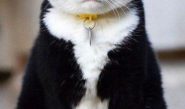 Liebe Katzenbilder 375x220 - Liebe Katzenbilder