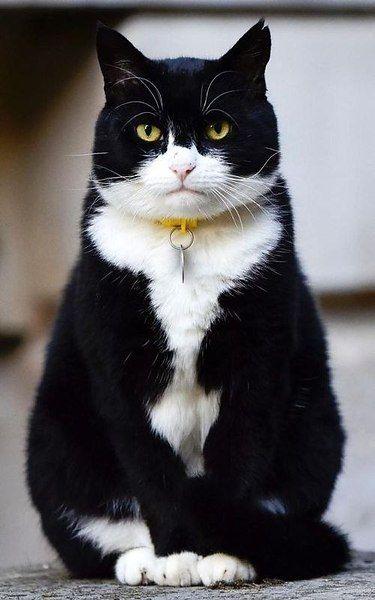 Liebe Katzenbilder - Liebe Katzenbilder