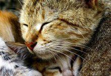 Little Cat Pic Bilder 220x150 - Little Cat Pic Bilder