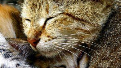 Little Cat Pic Bilder 390x220 - Little Cat Pic Bilder