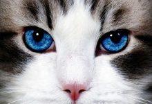 Lovely Cat Images Bilder 220x150 - Lovely Cat Images Bilder