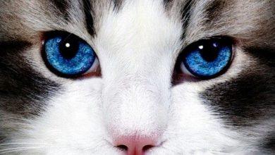 Lovely Cat Images Bilder 390x220 - Lovely Cat Images Bilder