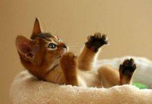 Lustige Bilder Katzen 220x150 - Lustige Bilder Katzen