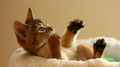 Lustige Bilder Katzen 390x220 - Lustige Bilder Katzen