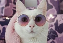 Lustige Bilder Katzenbabys 220x150 - Lustige Bilder Katzenbabys