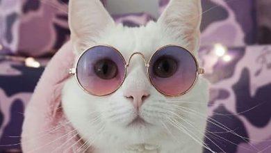 Lustige Bilder Katzenbabys 390x220 - Lustige Bilder Katzenbabys