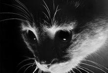 Lustige Bilder Mit Katzen 220x150 - Lustige Bilder Mit Katzen