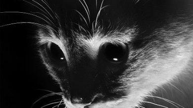 Lustige Bilder Mit Katzen 390x220 - Lustige Bilder Mit Katzen