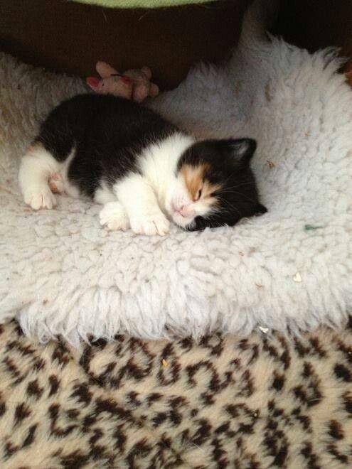 Lustige Bilder Von Katzen - Lustige Bilder Von Katzen