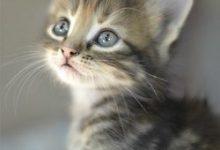 Lustige Kätzchen Bilder 220x150 - Lustige Kätzchen Bilder