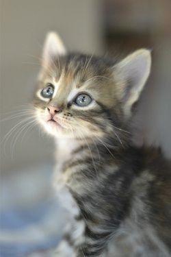 Lustige Kätzchen Bilder - Lustige Kätzchen Bilder