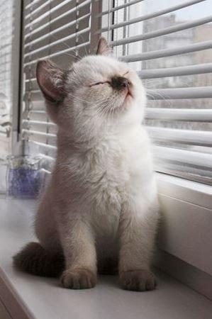 Lustige Katzen Animationen - Lustige Katzen Animationen