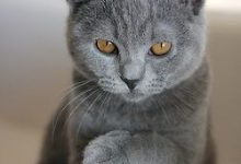 Lustige Katzen Bilder 2 220x150 - Lustige Katzen Bilder 2